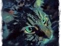gray main coon cat digital pet portrait by Artist BZTAT