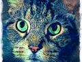 gray maine coon cat digital pet portrait by Artist BZTAT