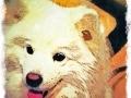 White Samoyed dog digital pet dog portrait by BZTAT
