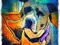 Pit Bull digital pet dog portrait by BZTAT