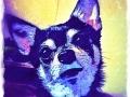 Chihuahua digital pet dog portrait by BZTAT