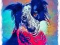 Border collie digital pet dog portrait by BZTAT