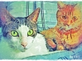 Two-cats-orange-gray-white-tabby-digital-pet-portrait-BZTAT