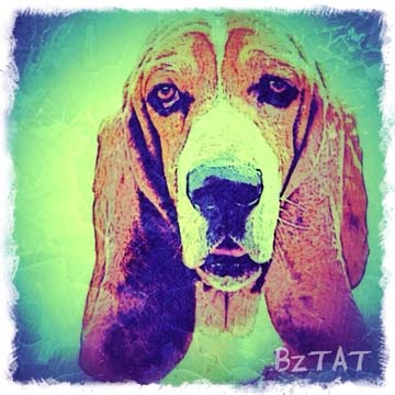 Custom Digital Pet Portrait by BZTAT