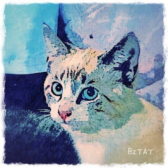 cat-portrait-tabby-point-siamese-digital-art-BZTAT