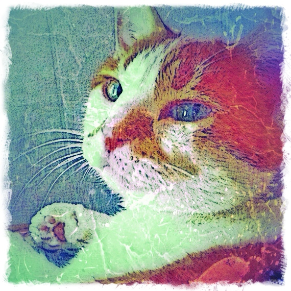 Ginger and White Cat - Custom Digital Fine Art Pet Portrait by Animal Artist BZTAT