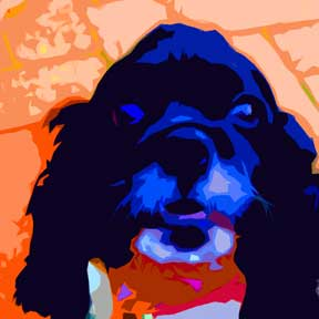Black Cocker Spaniel Dog  Custom Digital Fine Art Pet Portrait by Animal Artist BZTAT