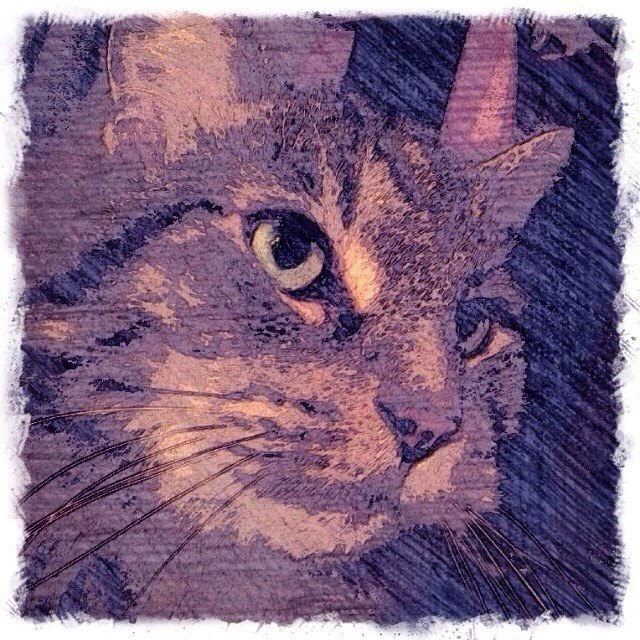 Maine Coon Cat - Custom Digital Fine Art Pet Portrait by Animal Artist BZTAT