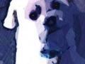 28. White Maltese Dog Drawing Card (Blank Inside)