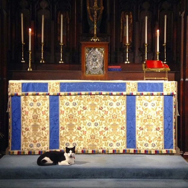 Simon the Church Cat, caretaker of the Church of the Advent in Boston, MA