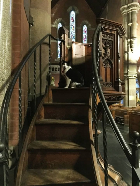 Simon the Church Cat, caretaker of the Church of the Advent in Boston, MA (Photo by Julianne Ture)