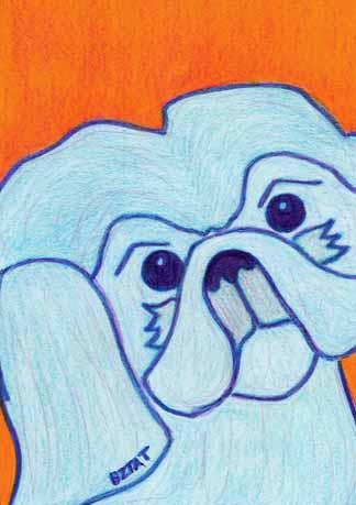 Shih Tzu dog drawing