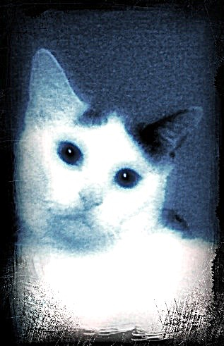Okey White cat digital