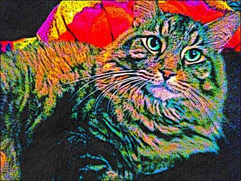 Maine-Coon-Cat-digital-art-BZTAT