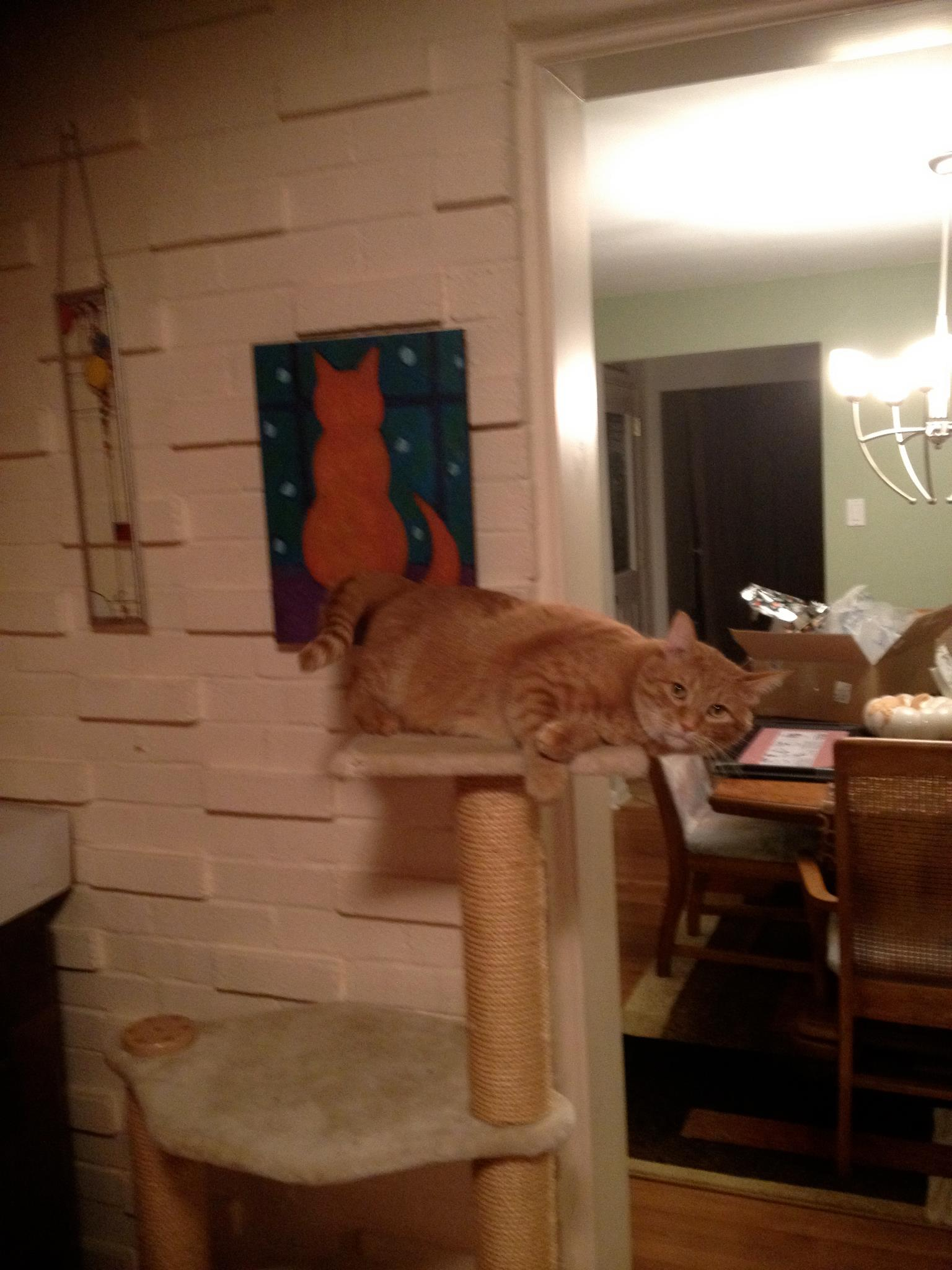 Cat imitating art