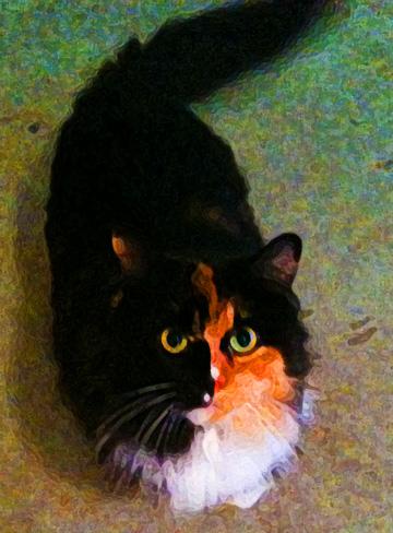 Calico cat art