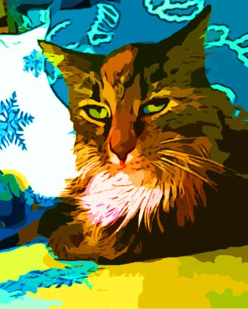 Calico Maine Coon Cat art