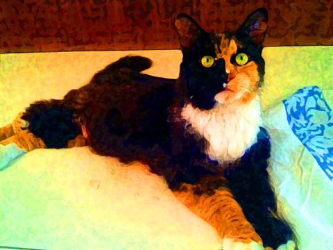 Calico cat digital art