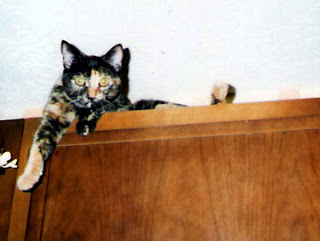 Tortoise shell cat on cabinets