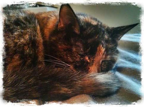 Slick, my tortoise shell cat