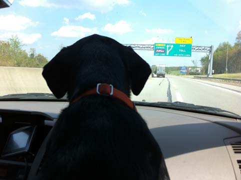 Traveling with Henry J. Puppypants, Spokesdog for Embrace Pet Insurance at BlogPaws 2013