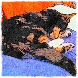 Mia Meow Calico cat digital pet portrait drawing by BZTAT