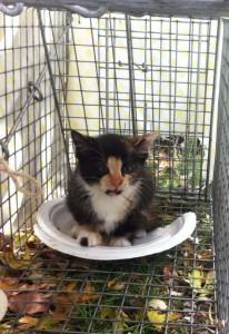 Mia Meow in live trap