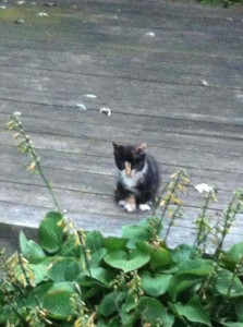 Mia Meow in the wild