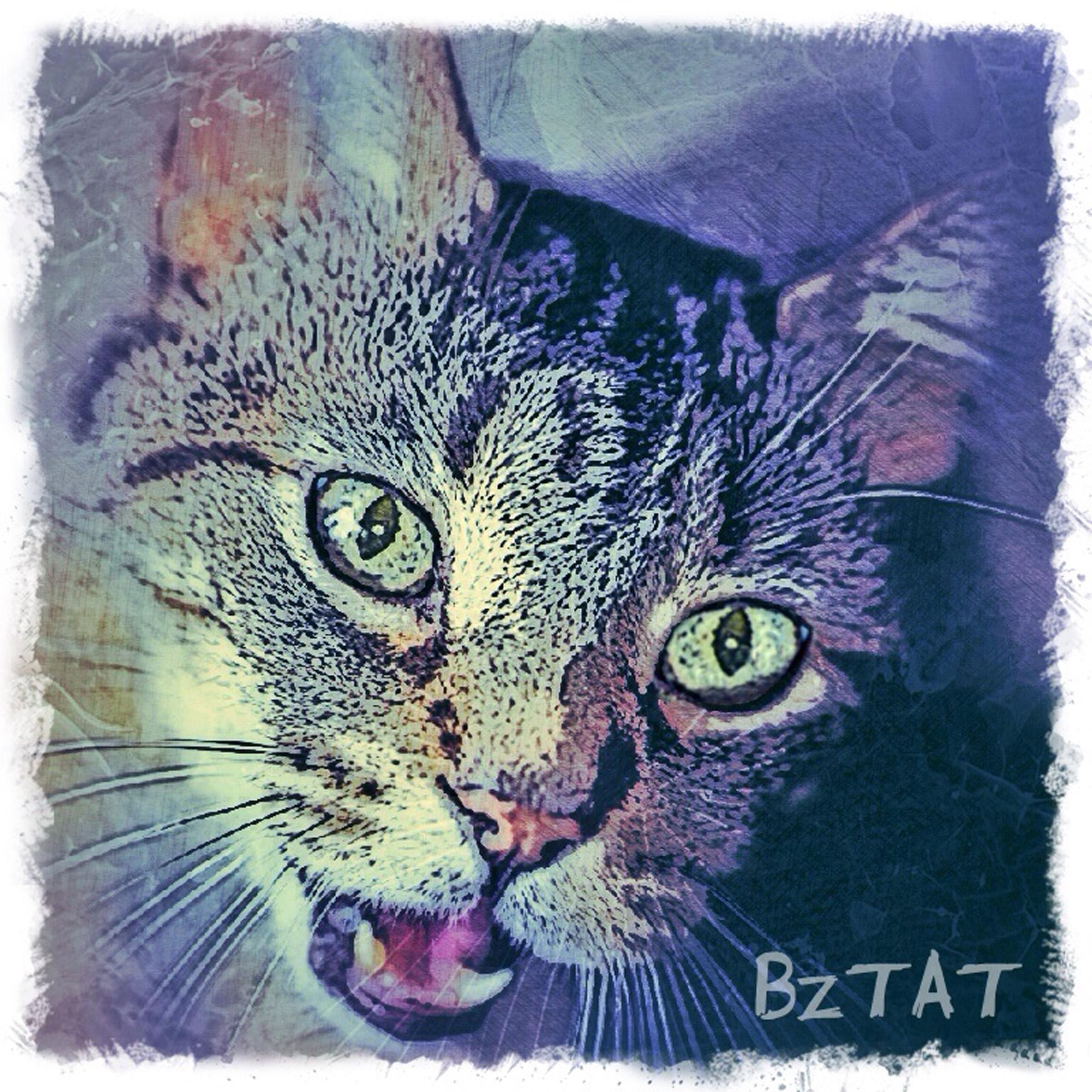 1-Digital-pet-portrait-cat-art-calendar-BZTAT