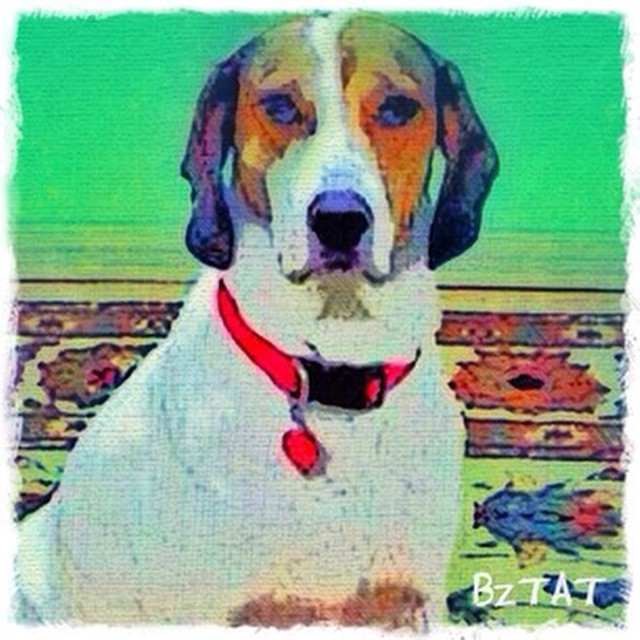 5-Digital-pet-portrait-dog-art-calendar-BZTAT