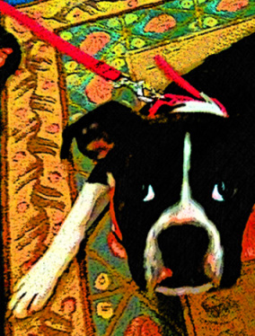 Boston Terrier Custom Digital Fine Art Pet Portrait by Animal Artist BZTAT