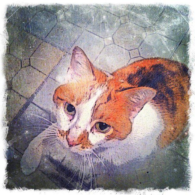 Custom Digital Ginger and White Cat - Fine Art Pet Portrait by Animal Artist BZTAT