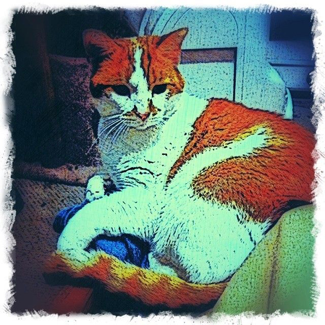 Ginger and White Cat - Custom Digital Fine Art Pet Portrait by Animal Artist BZTAT