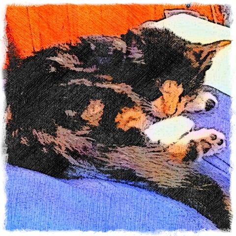 Calico Tortoise Shell Cat - Custom Digital Fine Art Pet Portrait by Animal Artist BZTAT