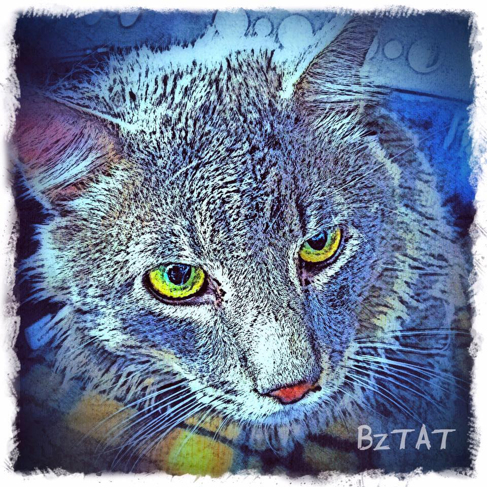 Mr. Sassy Pants Grey cat digital pet portrait