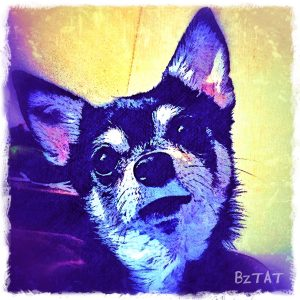 Contemporary Digital Chihuahua Dog Portrait by Artist BZTAT